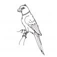 Coloriage Oiseau 12