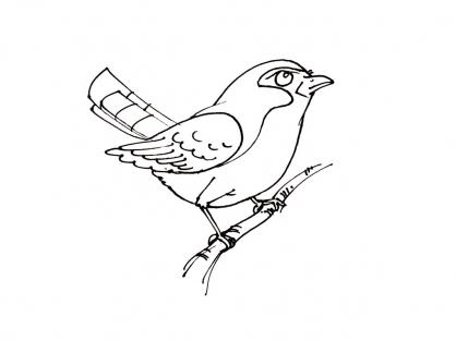 Coloriage Oiseau 13