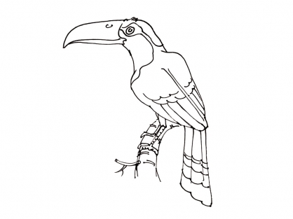 Coloriage Oiseau 2