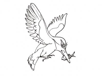 Coloriage Oiseau 3