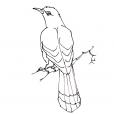 Coloriage Oiseau 4