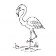 Coloriage Oiseau 5