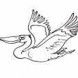 Coloriage Oiseau 6