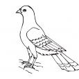 Coloriage Oiseau 7