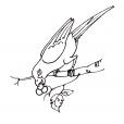 Coloriage Oiseau 8