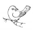 Coloriage Oiseau 9