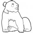 Coloriage Panda 13