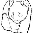 Coloriage Panda 3