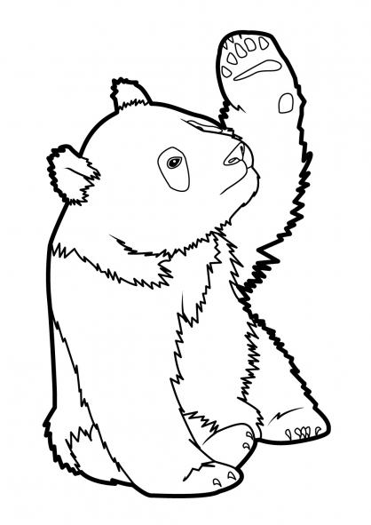 Coloriage Panda 5
