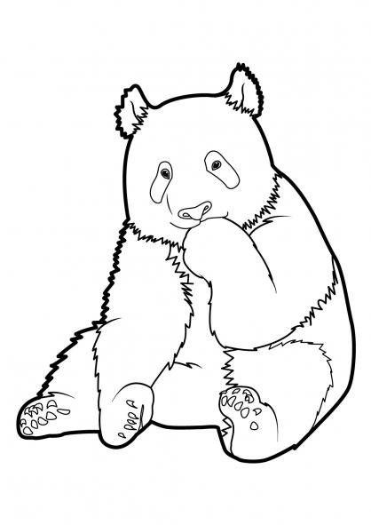 Coloriage panda 7 coloriage pandas coloriage animaux - Panda coloriage ...