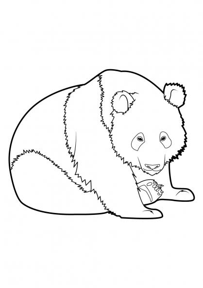 Coloriage panda 8 coloriage pandas coloriage animaux - Coloriage a imprimer panda ...
