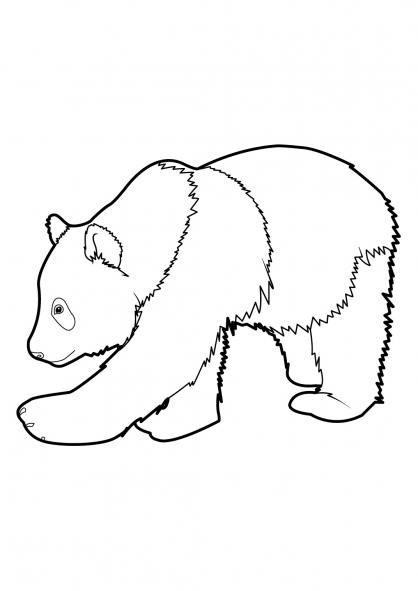 Coloriage panda 9 coloriage pandas coloriage animaux - Dessin panda roux ...