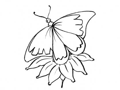 Coloriage Papillon 10