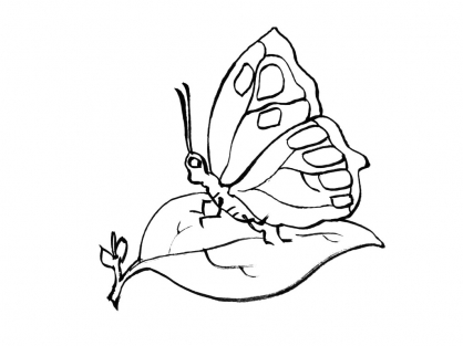 Coloriage Papillon-11