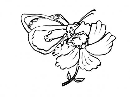 Coloriage Papillon-12