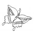 Coloriage Papillon-13