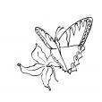 Coloriage Papillon-14