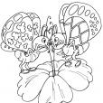 Coloriage Papillon 27