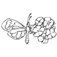 Coloriage Papillon 4