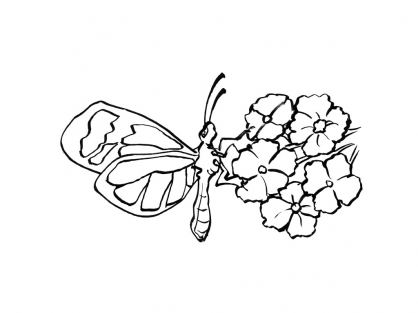 Coloriage Papillon 4