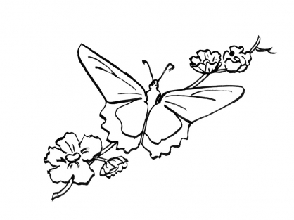 Coloriage Papillon 7