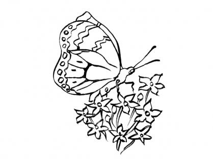 Coloriage Papillon-8