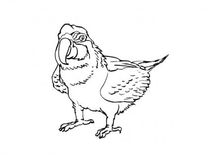Coloriage Perroquet 1