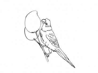 Coloriage Perroquet 7