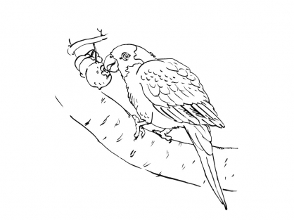 Coloriage Perroquet 8