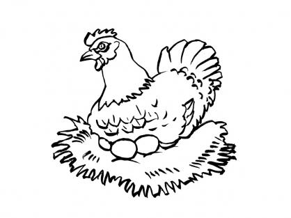 Coloriage Poule 14