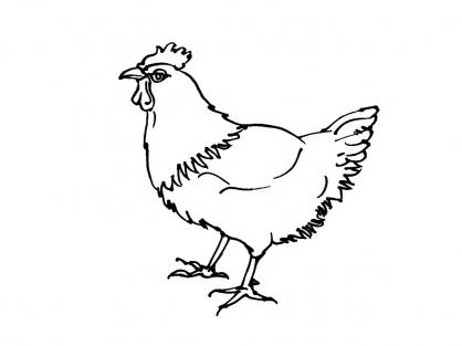 Coloriage poule 4 coloriage poules coloriage animaux - Dessin poules ...