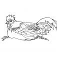 Coloriage Poule 8