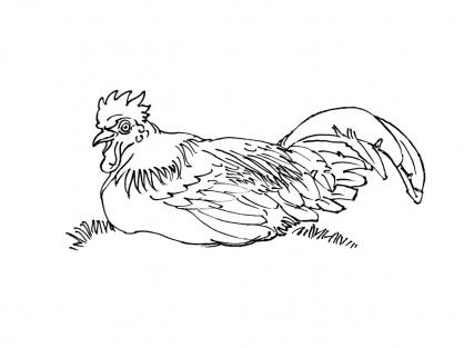 Coloriage poule 8 coloriage poules coloriage animaux - Coloriage poules ...