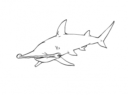 Coloriage Requin 10