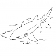 Coloriage Requin 11