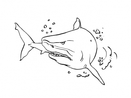 Coloriage requin 13 coloriage requins coloriage animaux - Dessin d un requin ...
