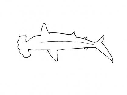 Coloriage Requin 15