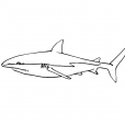 Coloriage Requin 2