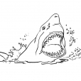 Coloriage Requin 3