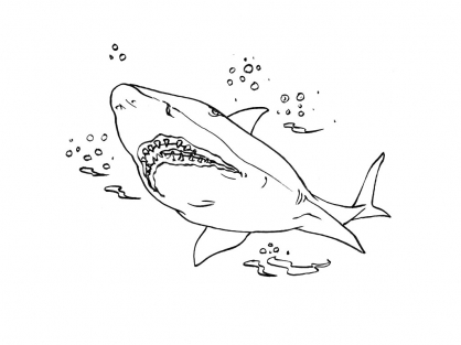Coloriage Requin 4