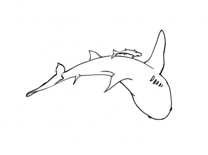 Coloriage Requin 5