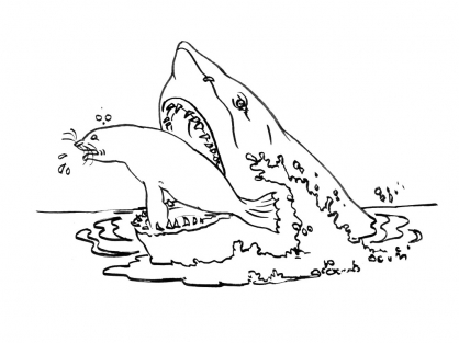 Coloriage Requin 6