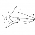 Coloriage Requin 9