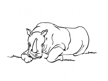 Coloriage Rhinocéros 1