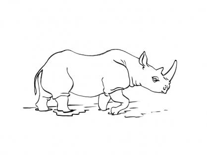 Coloriage Rhinocéros 11