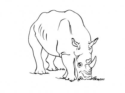 Coloriage Rhinocéros 12