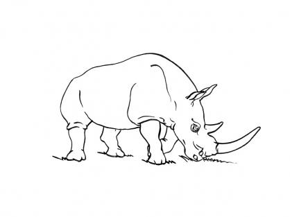 Coloriage Rhinocéros 15