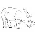Coloriage Rhinocéros 5