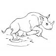 Coloriage Rhinocéros 8