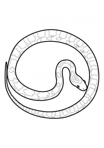 Coloriage Serpent 9